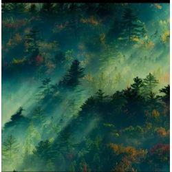 Dzianina pętelka drukowana 0,1 mb - zielony las