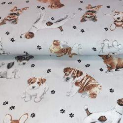 Rasy psów na szarym 0,1 mb
